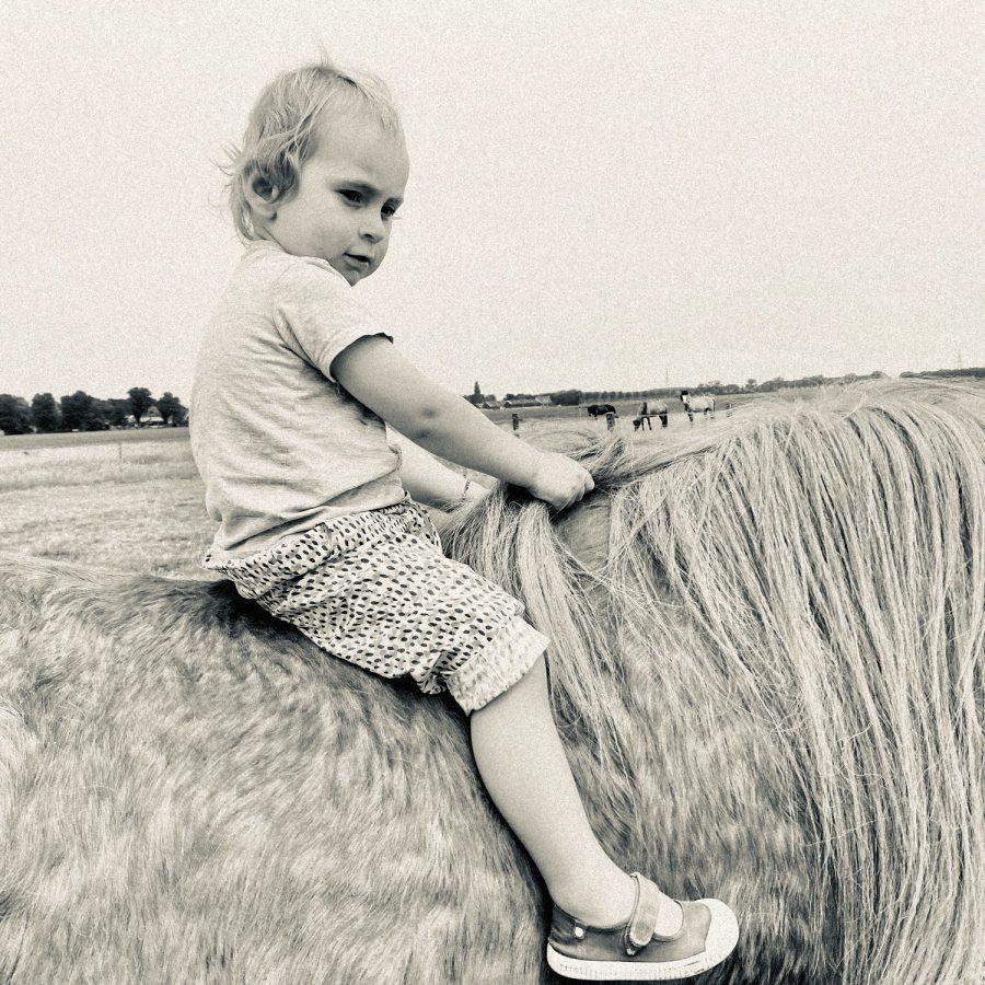 HORSE_ANNETJE_MIDDENBEEMSTER_2020_1500